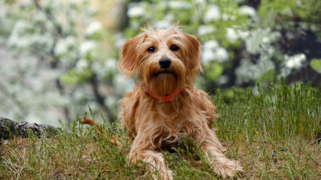 Do mixed breed dogs make good pets